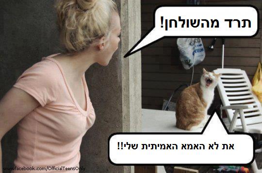 חתול מצחיק