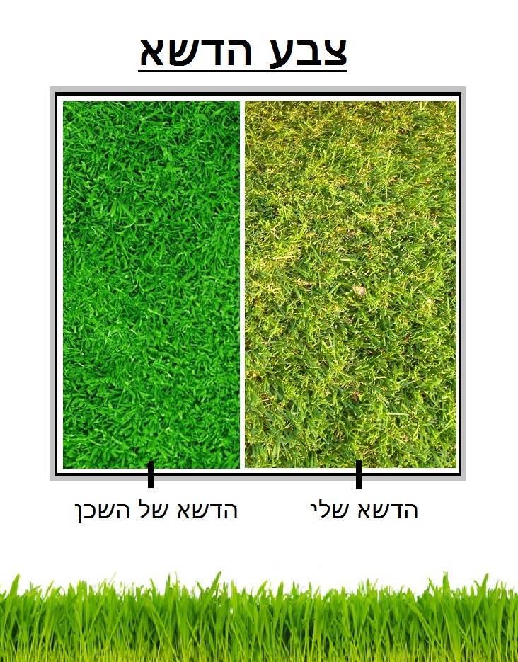 הדשא של השכן