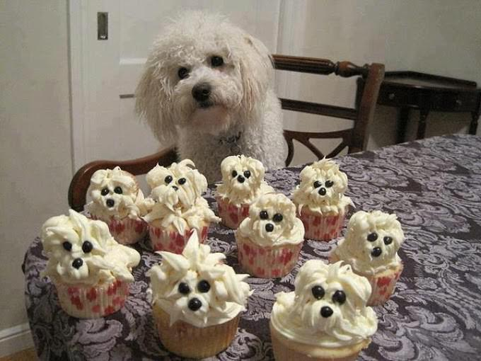 עוגיות כלבלבים